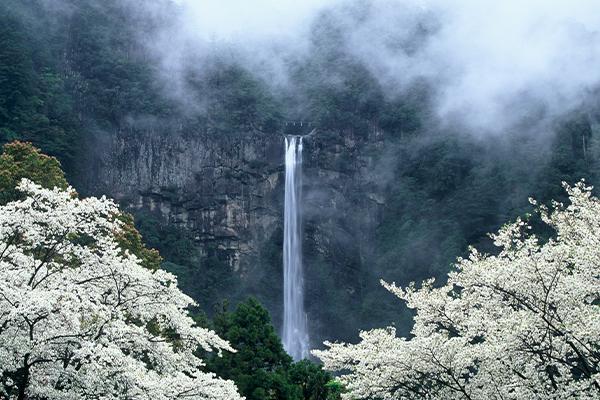 那智の滝 神武天皇 桜
